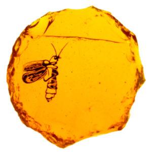 Dalle de verre, Armorique vitrail